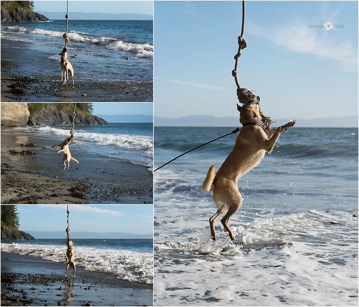 dog on rope swing_WEB